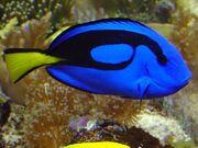 BlueTang8-1-