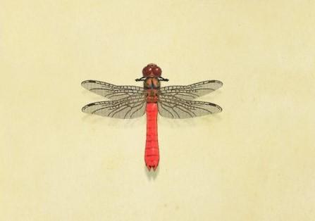 動森-紅蜻蜓