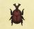 Escarabajo astado japonés NH