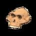 NH-Furniture-australopith