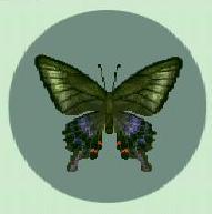 File:Peacock butterfly.jpg