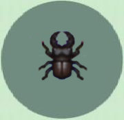 Mountain beetle p