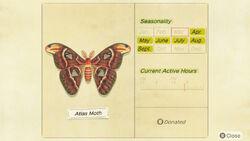 NH-encyclopedia-Atlas moth