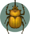 Elephant Beetle (City Folk)