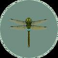 Darner Dragonfly (City Folk)