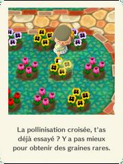 Présentation pollinisation croisée
