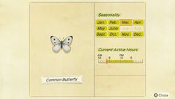 NH-encyclopedia-Common butterfly