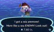 HNI 0089 sea anemone