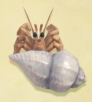 Even Hermit Crabs Have Wealth Inequality - The New York Times | 326x295