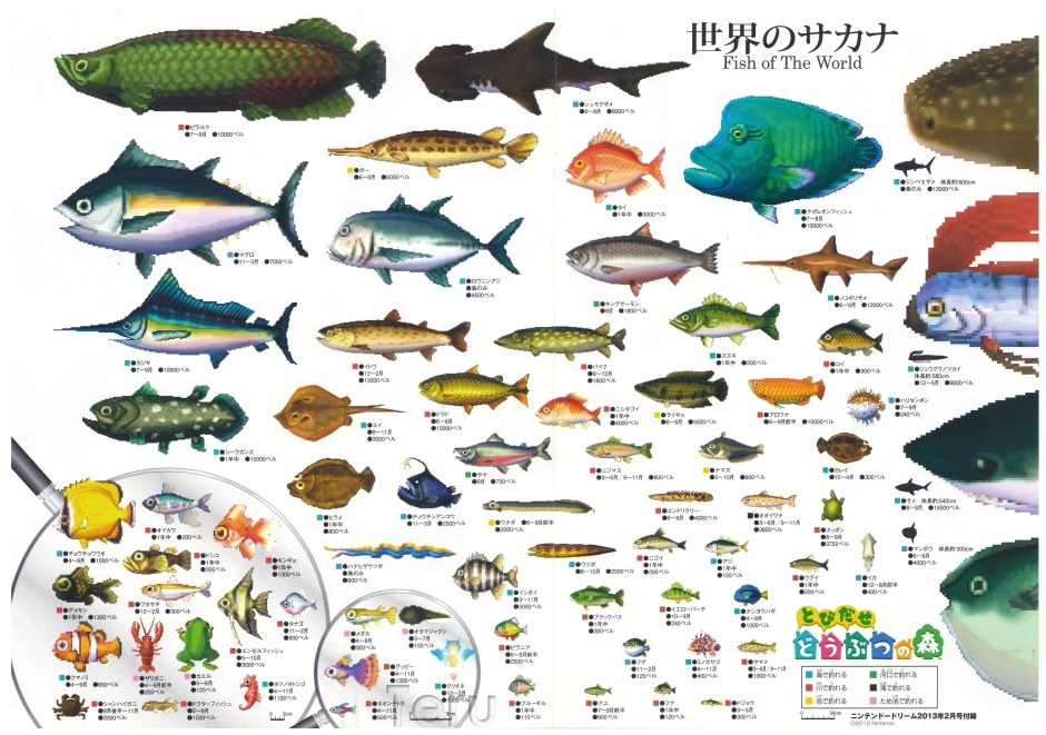 Image animal crossing wiki fandom for Acnl fish guide