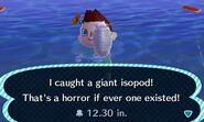 HNI 0084 giant isopod