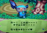 P1470019jewelbeetle