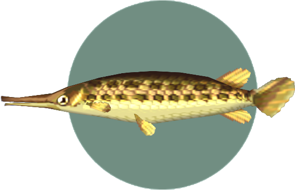 Picture Of A Gar Fish | Gar Animal Crossing Wiki Fandom Powered By Wikia