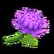 Crisantemo morado (New Horizons)