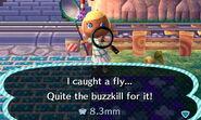 Fly catch