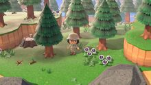 Rugged tree island