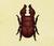 Escarabajo ciervo sierra NH
