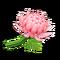 Crisantemo rosa (New Horizons)