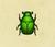 Escarabajo verde japonés NH