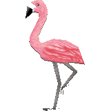 File:Mr.flamingocf.png