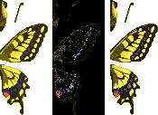 Tiger Butterfly (City Folk texture design)