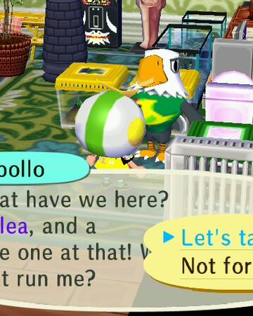 Flea Market Animal Crossing Wiki Fandom
