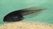 Real tadpole