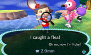 Catching Flea - NL