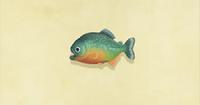 Piranha NH