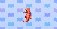 Sea horse encyclopedia (New Leaf)