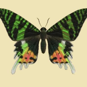 Madagascan Sunset Moth Animal Crossing Wiki Fandom