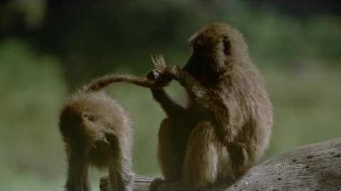 El Serengueti - Documental (3 4) HD
