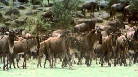 El Serengueti - Documental (2 4) HD