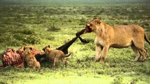 El Serengueti - Documental (1 4) HD