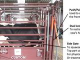 Restrain cattle