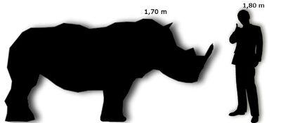 Rinoceronte Nero Uomo