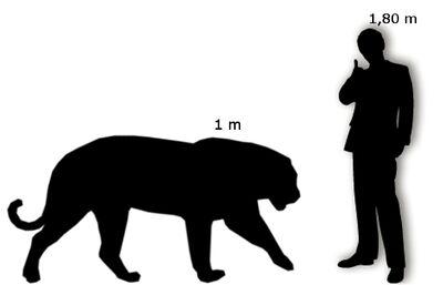 Tigre Siberiana Uomo