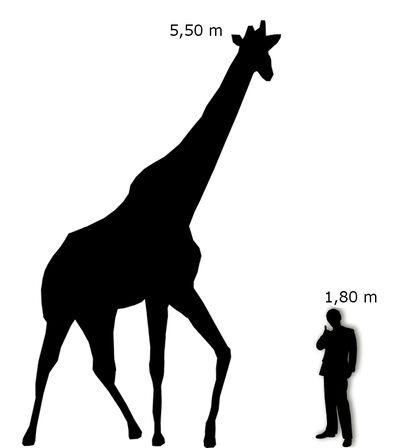 Giraffa Uomo