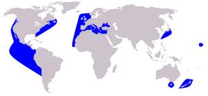Areale Delfino Comune