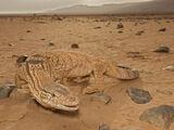 Varano del deserto