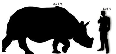Rinoceronte Indiano Uomo