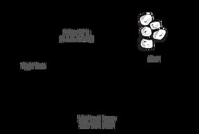 Aardvark track