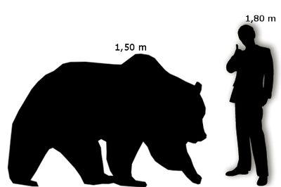 Orso Grizzly Uomo