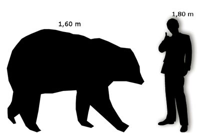 Orso Polare Uomo