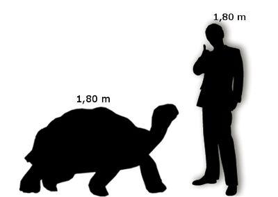 Tartaruga delle Galapagos Uomo
