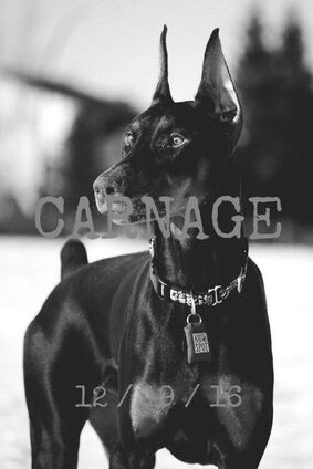 Carnage-Banner