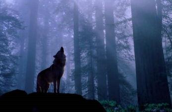 File:Wolfwoods.jpg