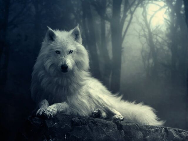 File:Wolf-wolves-29803359-1024-768.jpg