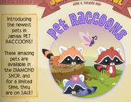 Jamaa-Journal Vol-089 Pet-Raccoons