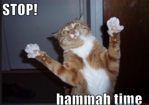 File:Lolcat hammer time.png
